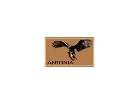 Gens Antonia